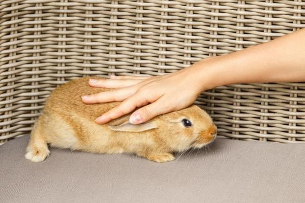 Мой кролик умер - что мне делать с телом? - симптомы умирающего кролика