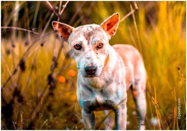 При дерматозах собаке необходим лечебный корм
